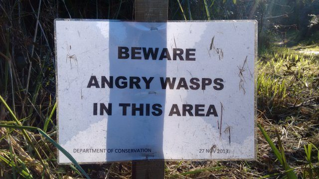 Angry wasps stopped River work