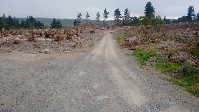 Road to the Blue Pool after felling