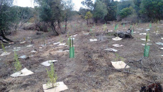 Hydro Planting IMG_20180611_145743756
