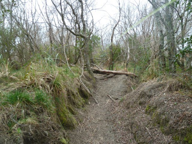 p1020474-jpg  Wind felled tree across river track