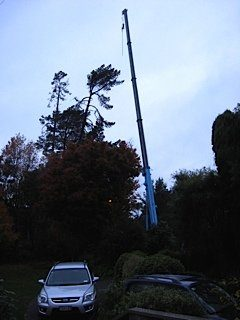 Large Crane hoisted tree feller to cut sections