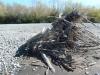 005 Debris causing islands