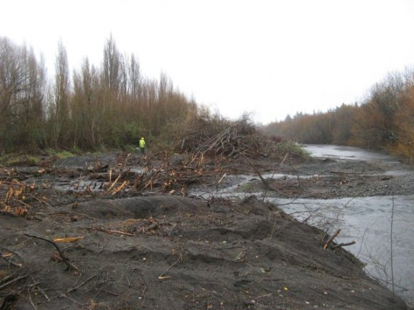 willow-clearance-img_1920